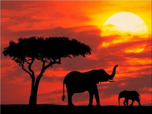 africa red