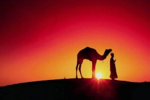 sunset-desert-men-camels--1549356-480x320